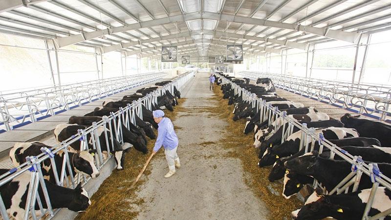 DỊCH VỤ ĐĂNG KÝ LƯU HÀNH THỨC ĂN CHĂN NUÔI bò